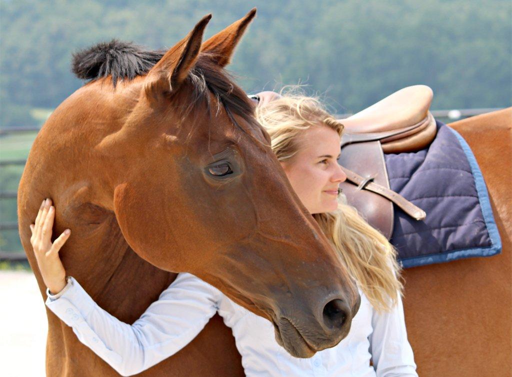 Horse Training for Beginners