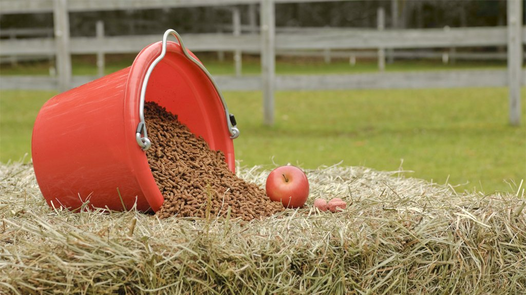 Horse Nutritional Requirements: What Is the Right Proportion?
