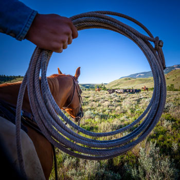 Roping in the View