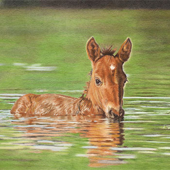 Salt River Foal